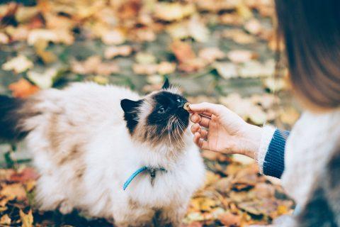 Chat qui mange une croquette